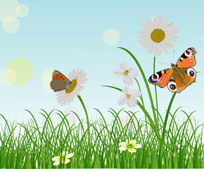 chamomile flowers and two butterflies