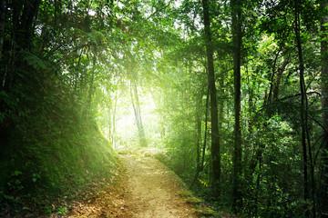 way in jungle of Malaysia