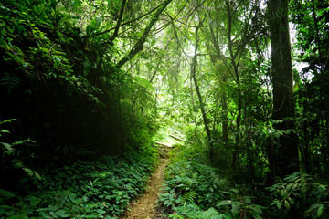 way in jungle of Malaysia