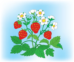 Bush of a blossoming strawberry with berries.