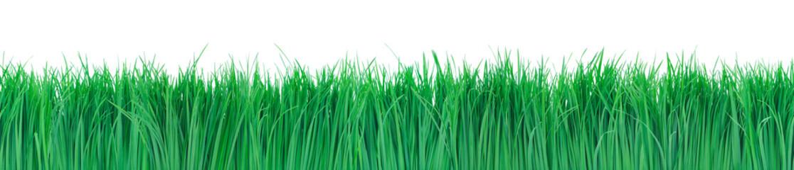Seamless green grass.