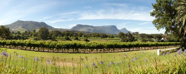 Wine estate in Cape Town