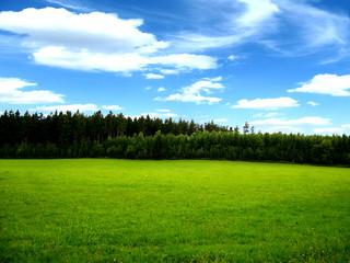 Fototapete - Waldwiese mit Wolken