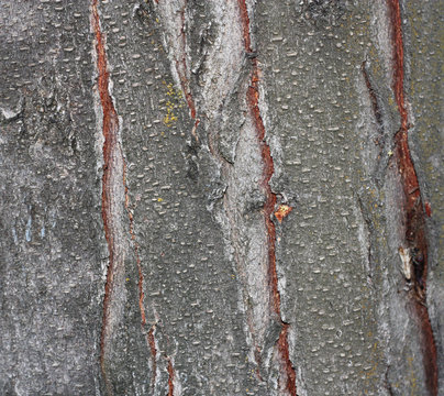 Close up view of wood. Good natural background