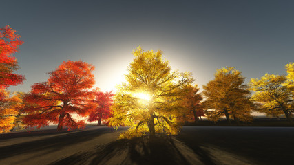 Autumn Trees and Filtered Sun