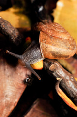 snail eating palm seed