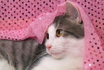 Katze Luana in rosa Stoff/ H