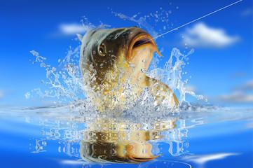 Fische 152