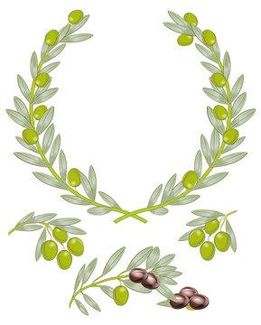 Oliven Zweige mit Oliven isoliert auf weiß
