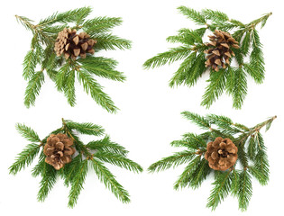 Set Christmas tree branches with cone isolated on white