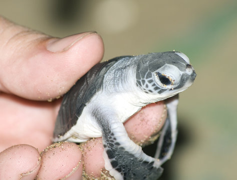 Turtle in man hand.