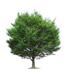 白バックの木