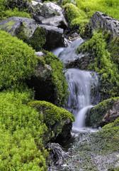 Agua entre musgo y líquenes.