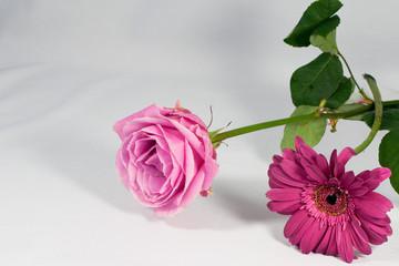 Stilleben mit Rose und Gerbera