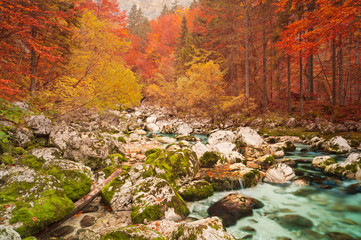 Golden autumn mountain forest with turquoise brook.
