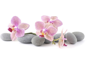 Still life with pink orchid with gray stones