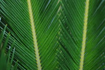 palme leaf background