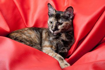 retrato de gatinha