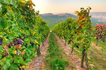 Fototapete - Weinberg und Wein