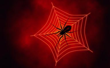 Spider web with big spider
