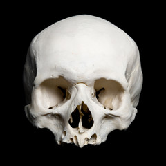 Upper half of the real human Skull