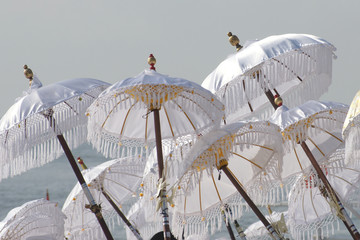 Bali Schirme