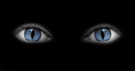 Yeux bleus catwoman - fond blanc