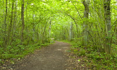 Path leading through sunlit forest, wide angle photo