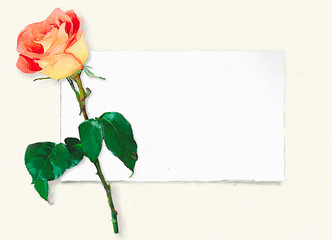 red rose on the elegant post card