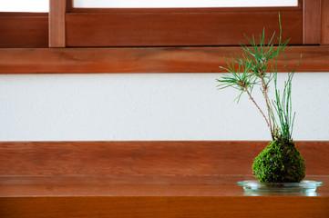 松 鉢植え 苔