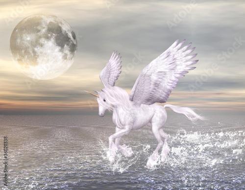 Quot Bellissimo Cavallo Alato Che Corre Nel Mare Quot Immagini E