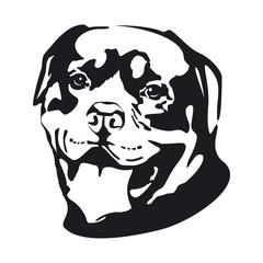 Dog. Rottweiler.