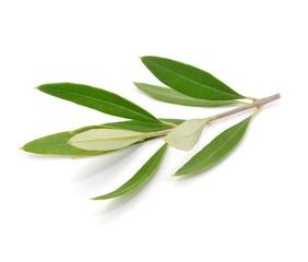 Symbol, Olivenblatt