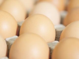 close up of fresh chicken eggs