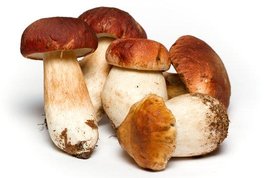 Funghi porcini su sfondo bianco