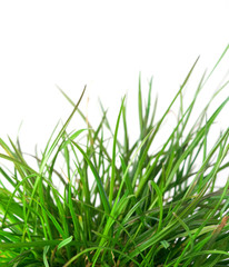 Isolated green grass on white background