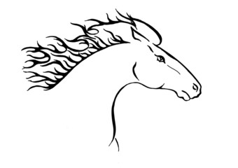 illustration of head of wilde horse.
