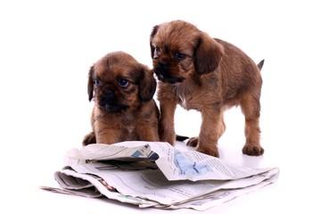 zwei Welpen lesen Zeitung