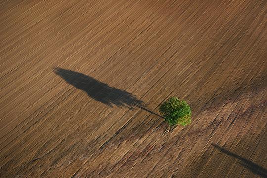 Photo aérienne arbre isolé