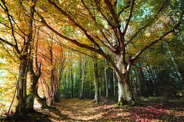 Bunter Mischwald im Herbst mit Blättern