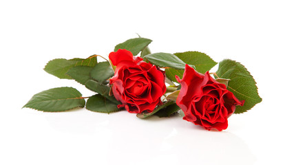 two Beautiful red roses over white background