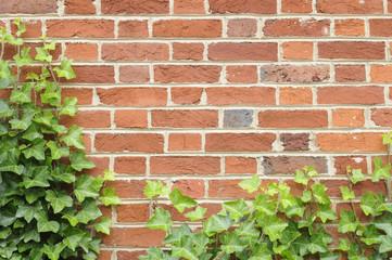 Ivy on Brick Wall