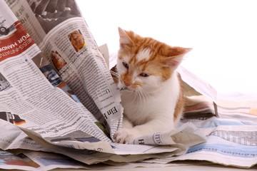 junge Katze knabbert an Zeitung