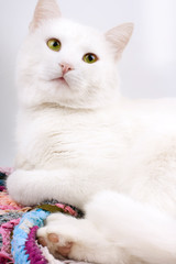 Young beautiful white cat isolated on white background