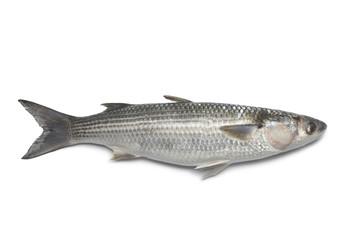 Fototapeten Fisch Whole fresh grey mullet