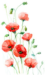 poppies (series C)