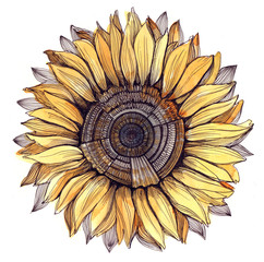 sunflower (series C)