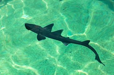 Cub shark in an aquarium