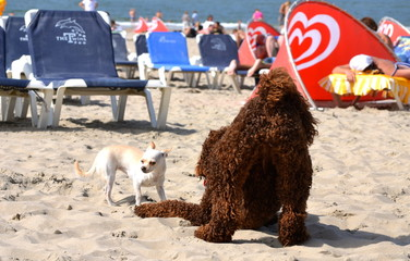 Two dogs playing together on the beach