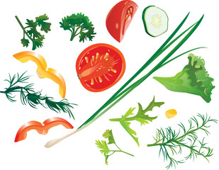 Set of colorful isolated vegetables - tomato, corn, cucumbe
